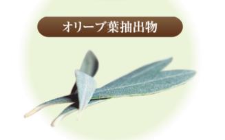 オリーブ葉抽出物